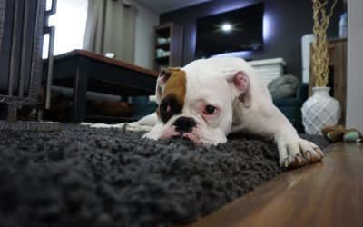 More Pets are Overweight and Their Health is Suffering