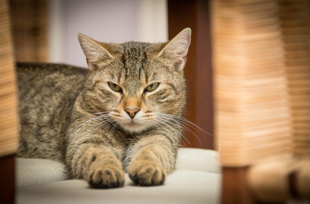 Analyze your cat – Veterinarian studies feline psychology