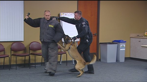 Rocky, a  Boise Police K-9 Officer, is fully Recovered and Training with BPD