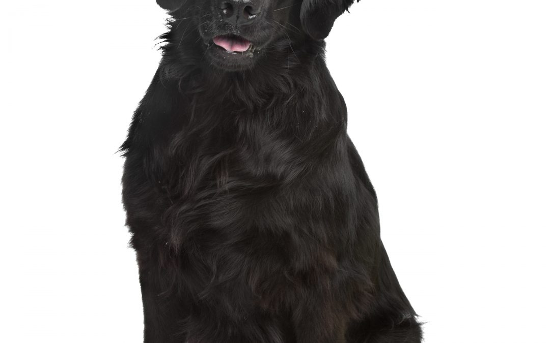 Boise Pet Owner Creates Free Online Pet Memorial Website