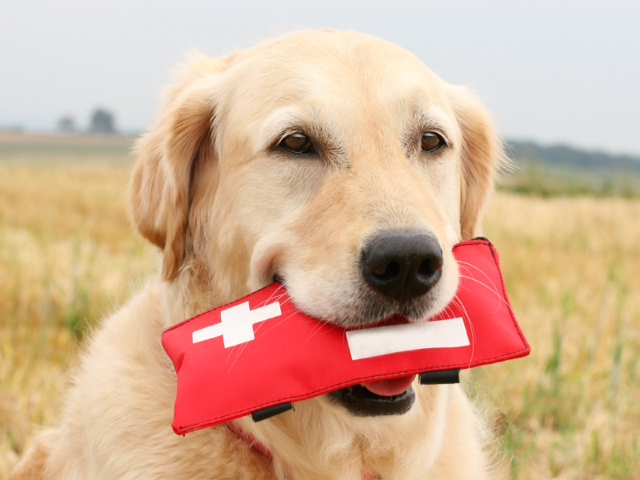 WestVet Offering Red Cross Dog First Aid through Community Education