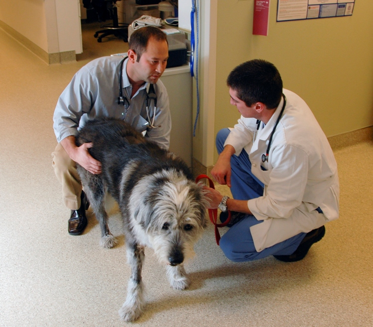 What's the best veterinary surgery for my dog's torn ACL?