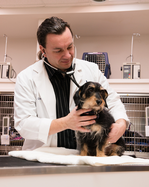 Help prevent Cheat Grass problems with your pet; Tips from ER Vet Dr. Curtis Brandt