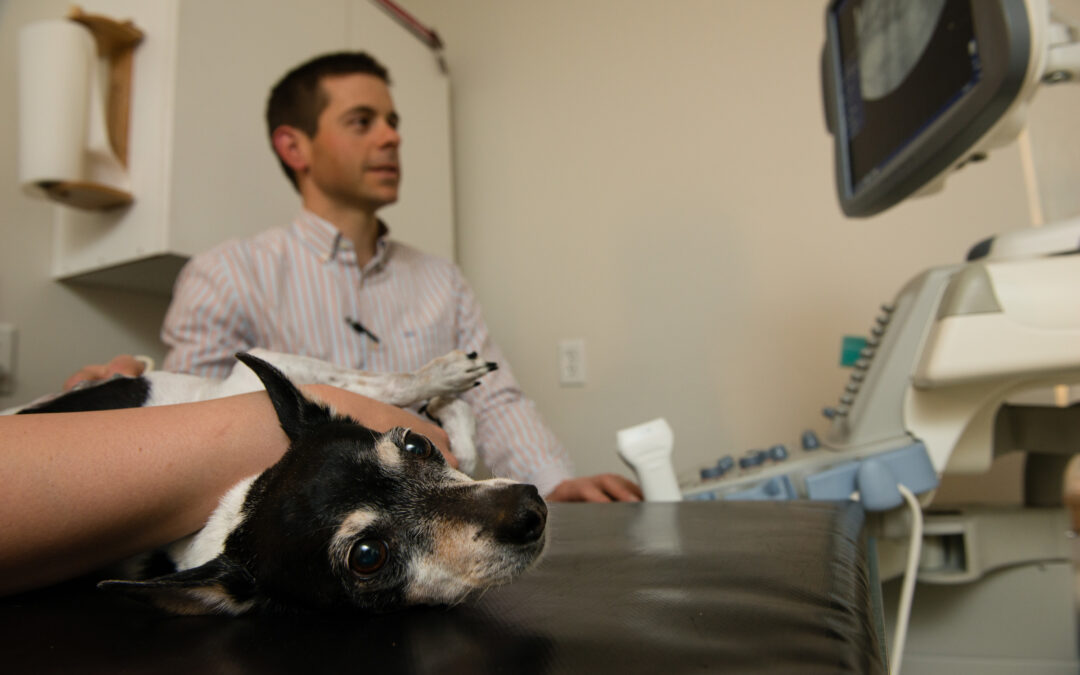 A Veterinary Radiologist is a Valuable Resource for Pet Owners