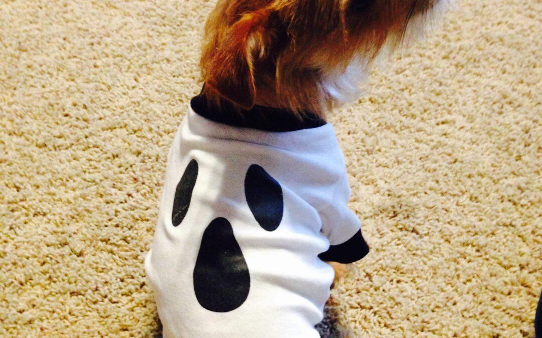 Keeping Pets Safe During Halloween