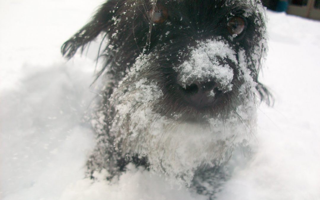 Cabin Fever - Helping Your Pet with the Winter Blues