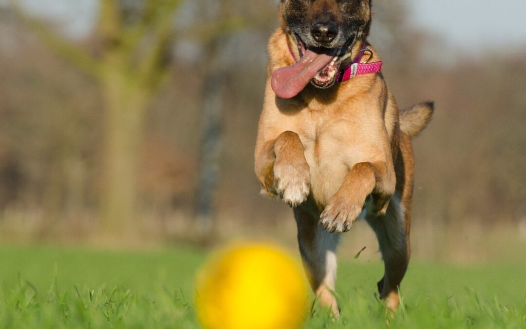 Pet Summer Safety: Avoiding Common Veterinary Problems at the ER