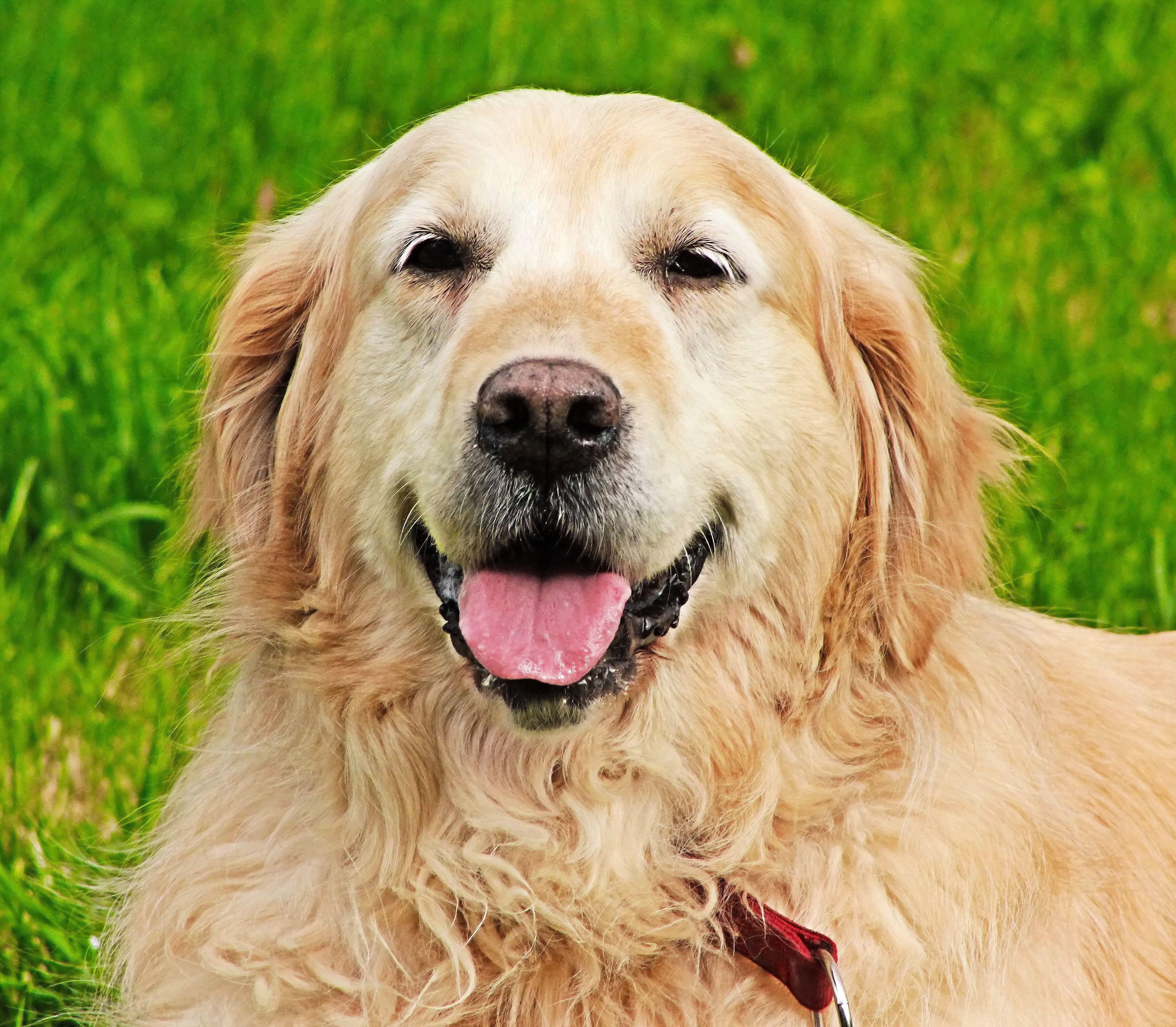 WestVet offers Dog First Aid Classes for Treasure Valley Pet Owners