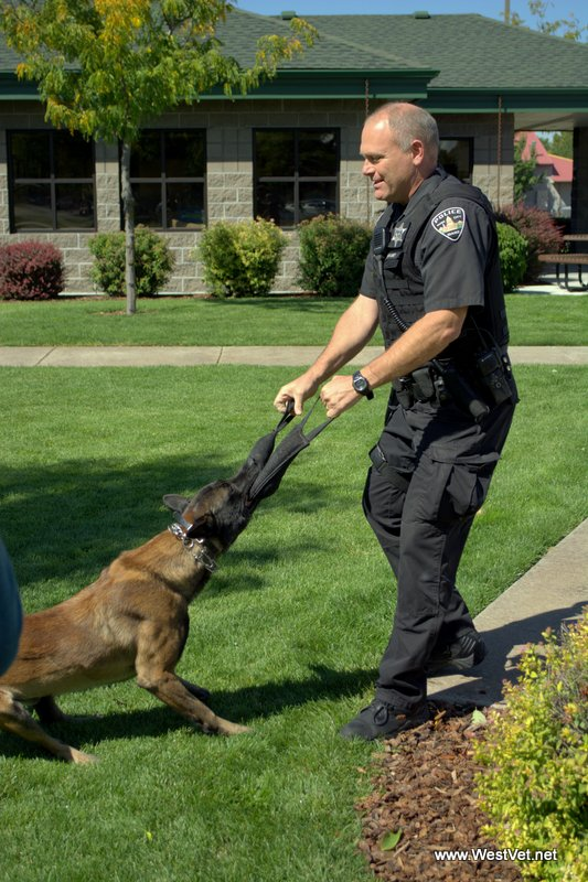 Rocky is a Boise Police K9 Officer who successfully underwent the LAG procedure to prevent BLOAT
