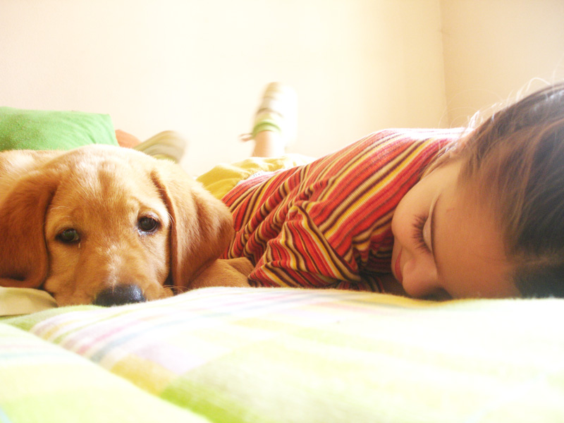 Helping children cope with the loss of a pet