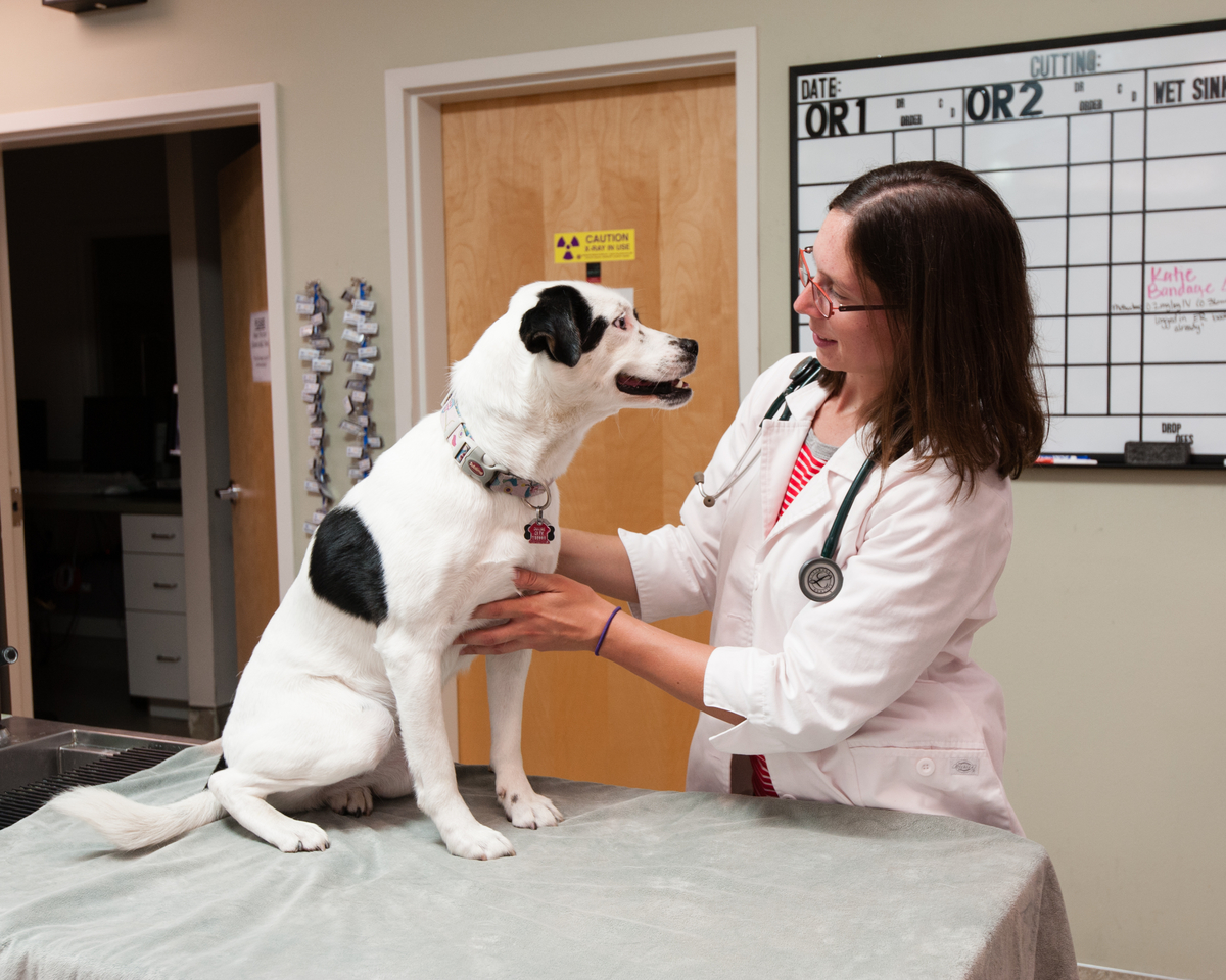 Dr. Kara Lindberg with tips in today's veterinary blog on ticks and dogs