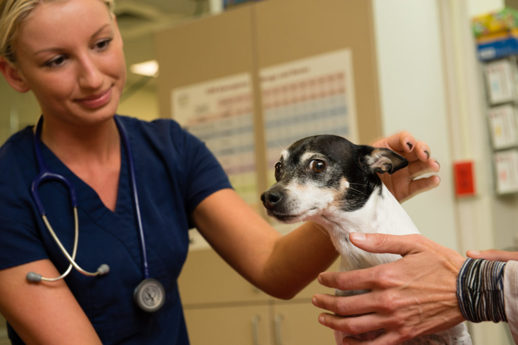 WestVet Pet Loss Information