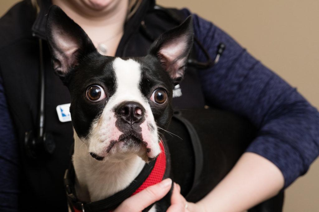 Animal Cancer Treatment Center