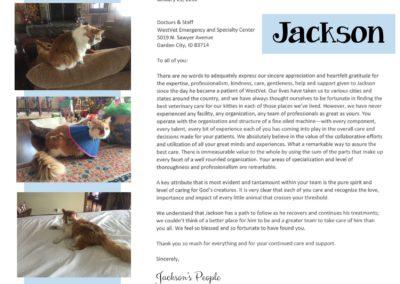 Jackson_kitty