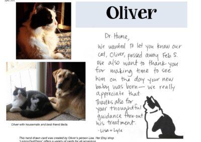 Oliver_Cat_Web