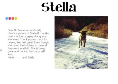 Stella_Novik_WEBSITE_CARD