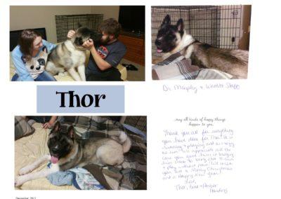 Thor_Web
