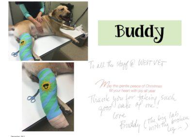 buddy_web