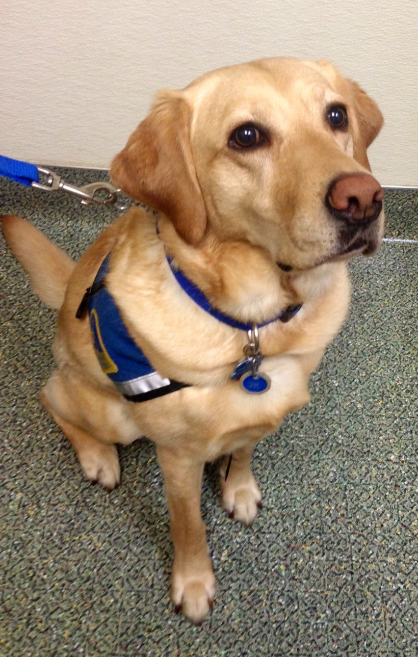WestVet offers free eye exams for Service dogs ACVCO