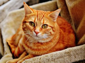 Decreasing Your Cat's Separation Anxiety & Worries