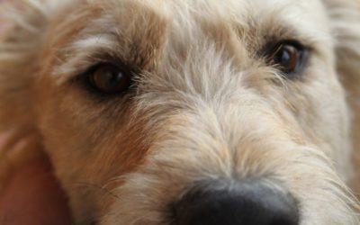 When a Pet Has Cancer