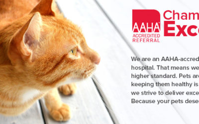 WestVet earns AAHA accreditation