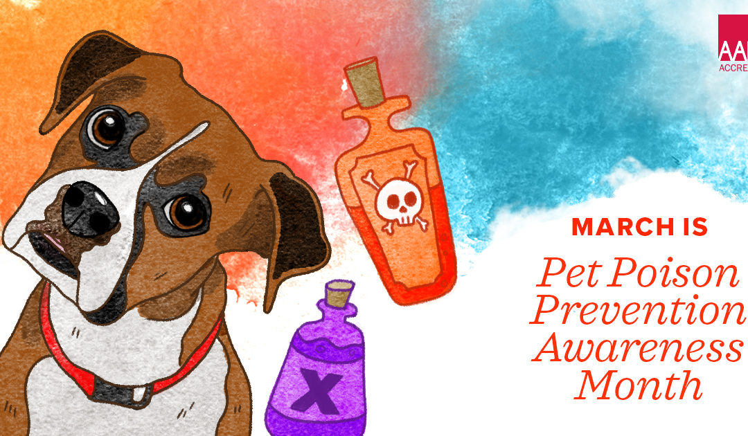 March is Poison Prevention Month for Pets