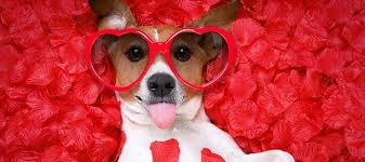 How to Keep Your Pet Safe this Valentine's Day