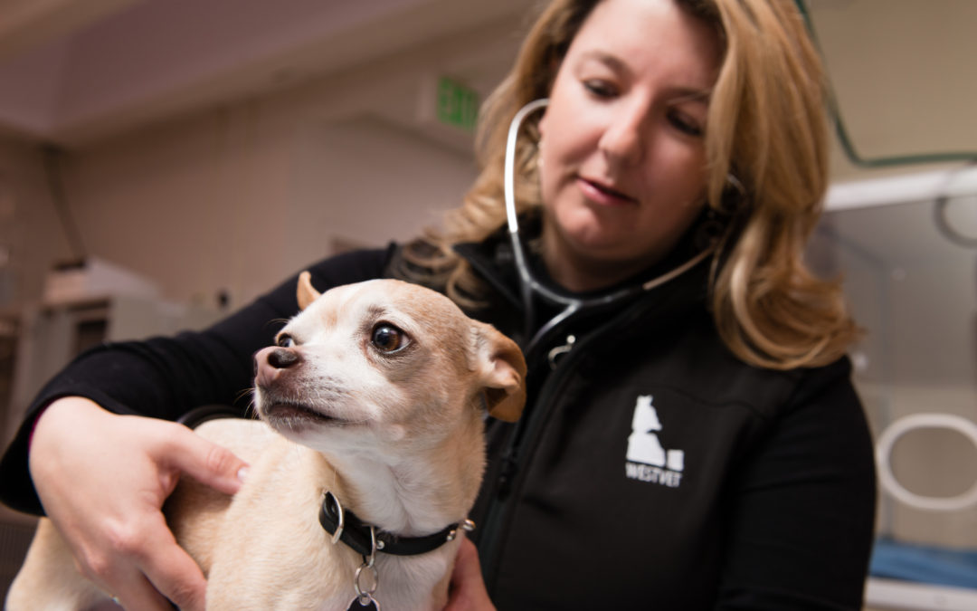 Grieving after losing a Beloved Pet, Insight from ER Vet Dr. Desiree FitzGerald