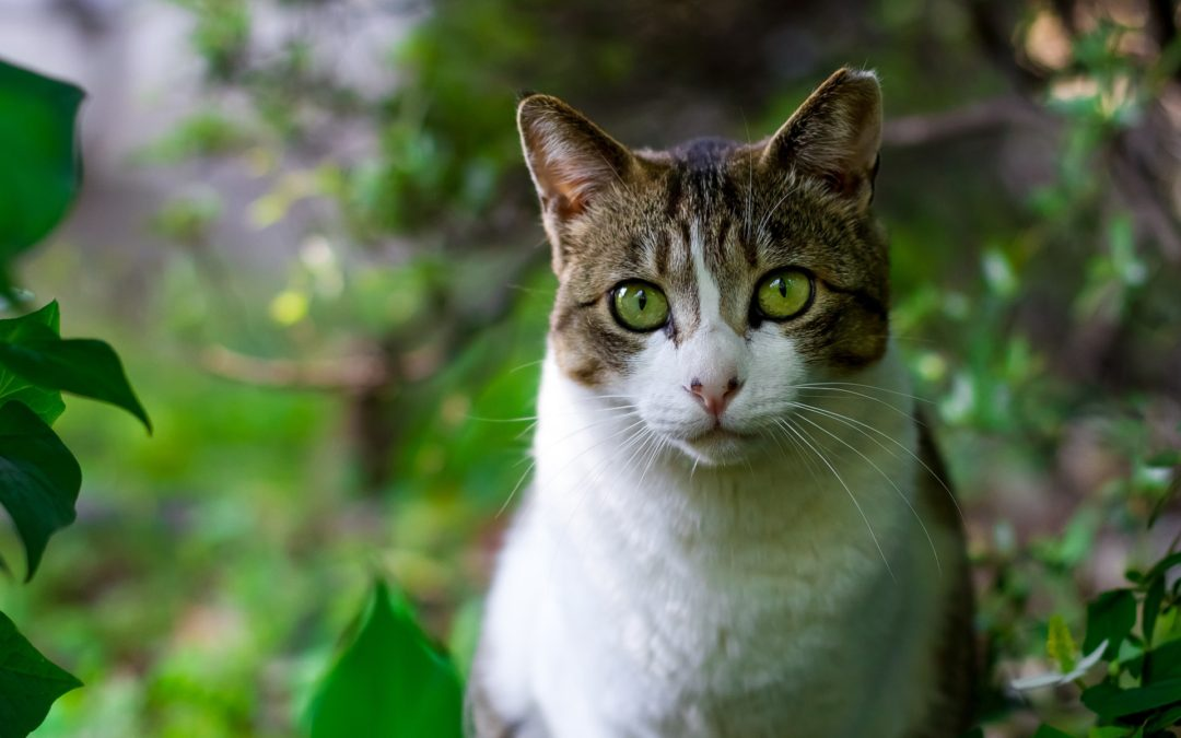 Why Cats Eat Grass—and When to Worry About It