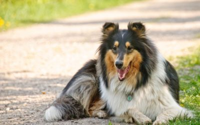 Dog Hydration 101: Is my dog getting enough water?
