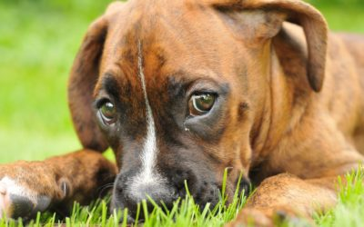 Cleft Palates in Pets